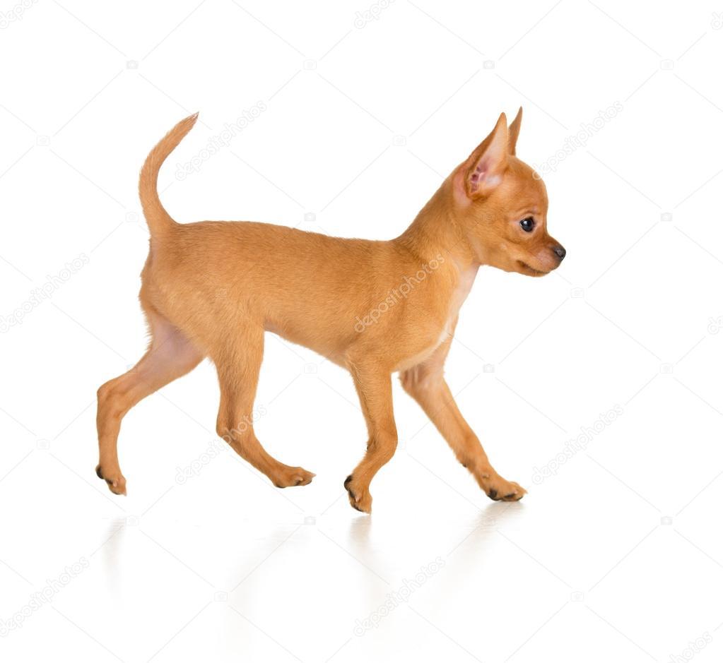 date side dogging trondheim