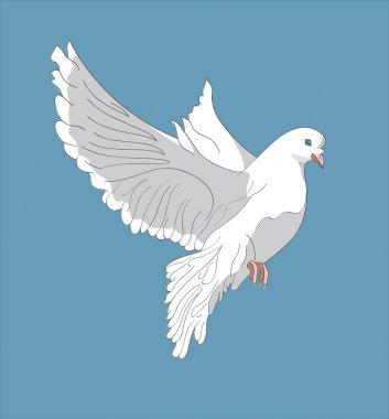 Fluing pigeon