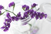 větve fialové květy