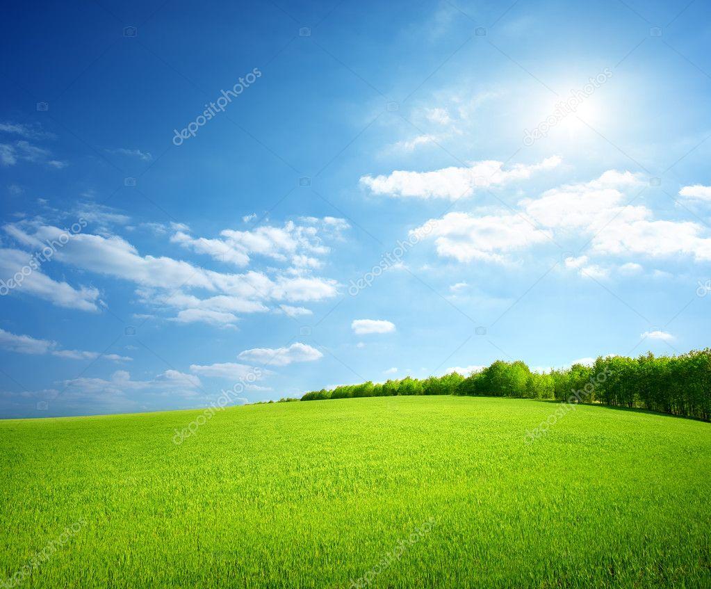 Фотообои Field of green grass