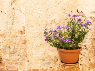 Pienza, Tuscany region, Italy. Old wall with flowers stock vector
