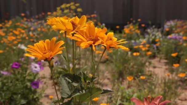 květiny v zahradě, natočeno v pohybu