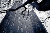 Kings Park Psychiatric NY