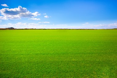 Background image of lush grass field under blue sky stock vector