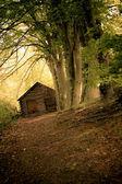 Fotografie Secluded Cabin