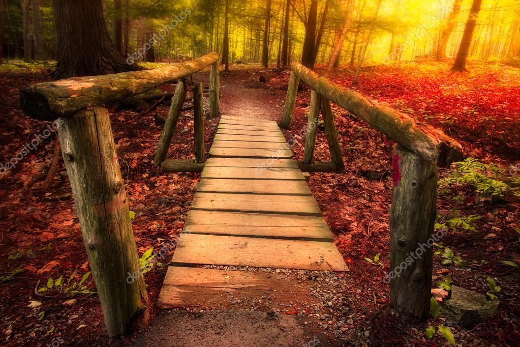 Footbridge in golden light