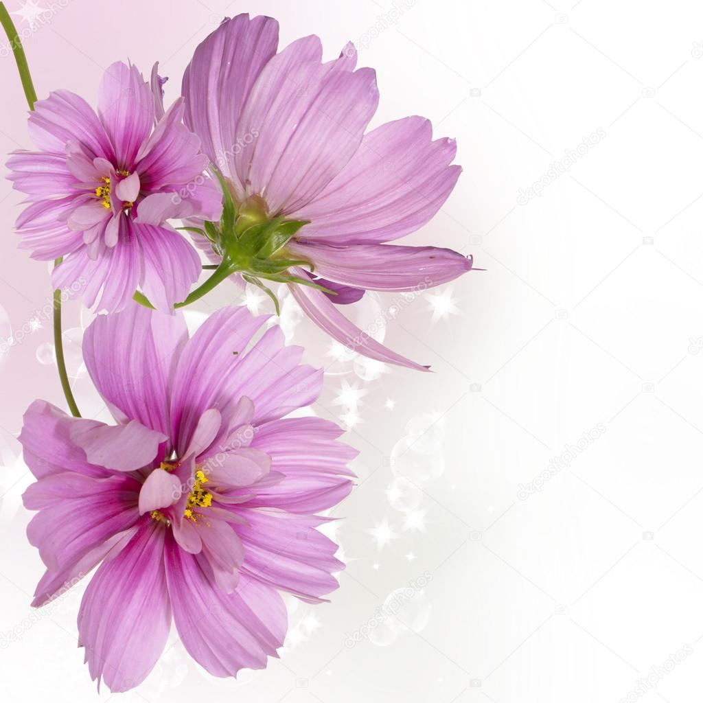 Flowers beautiful border
