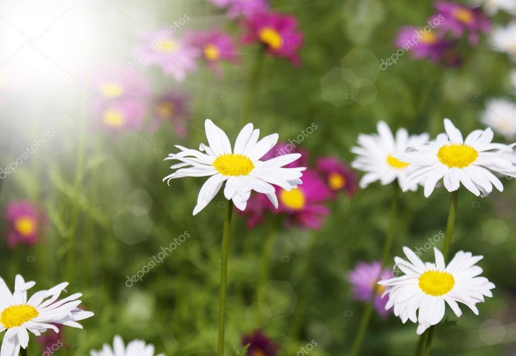 Фото летние цветы в природе
