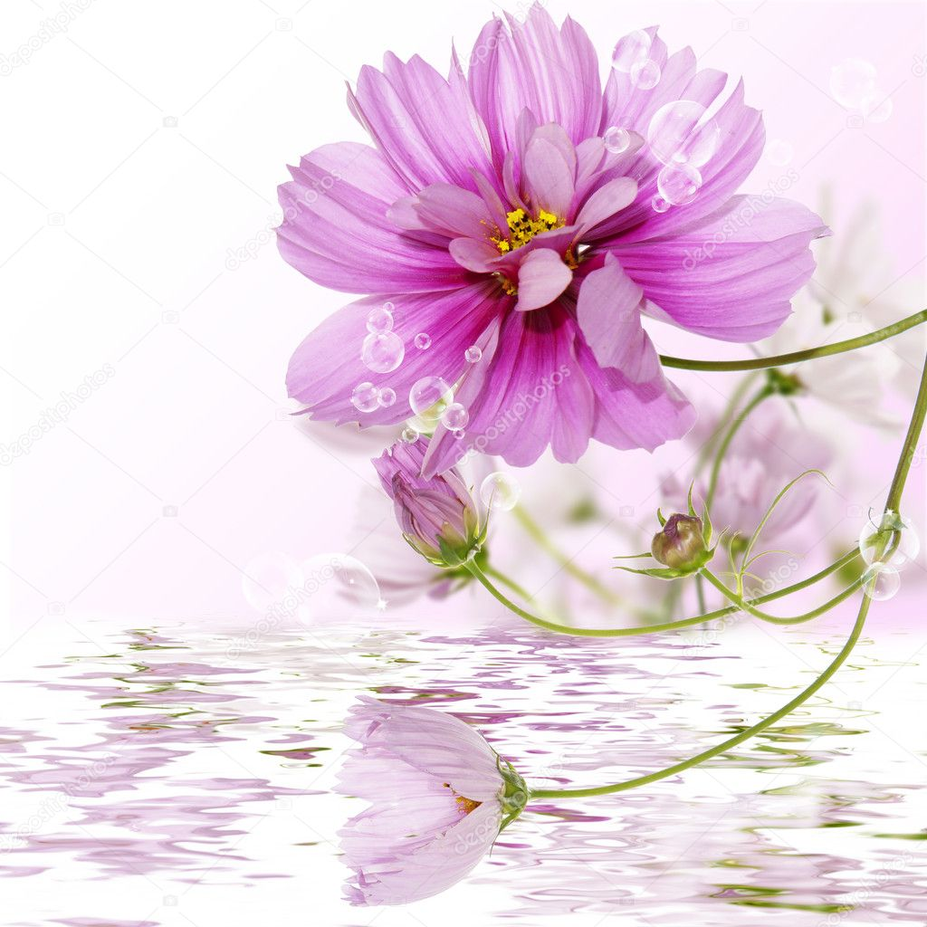 Decorative pink flowers in water