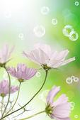 růžový dekorativní krásné květiny