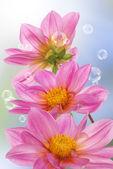 Dovolená krásná květina kartu