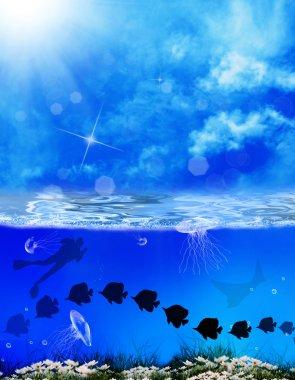 Diving. Underwater marine life