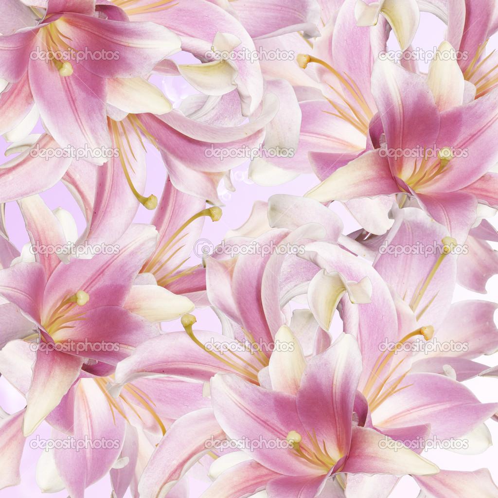 Beautiful flower card lily stock photo alex150770 33841017 beautiful flower card lily photo by alex150770 izmirmasajfo