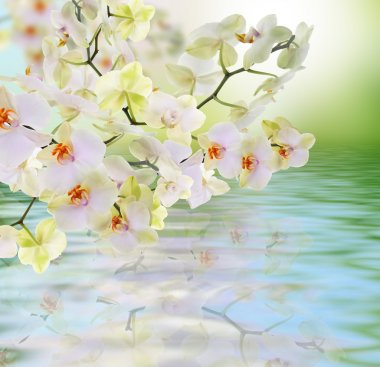 Flowers water Japanese Orchid.Beauty.Flora card