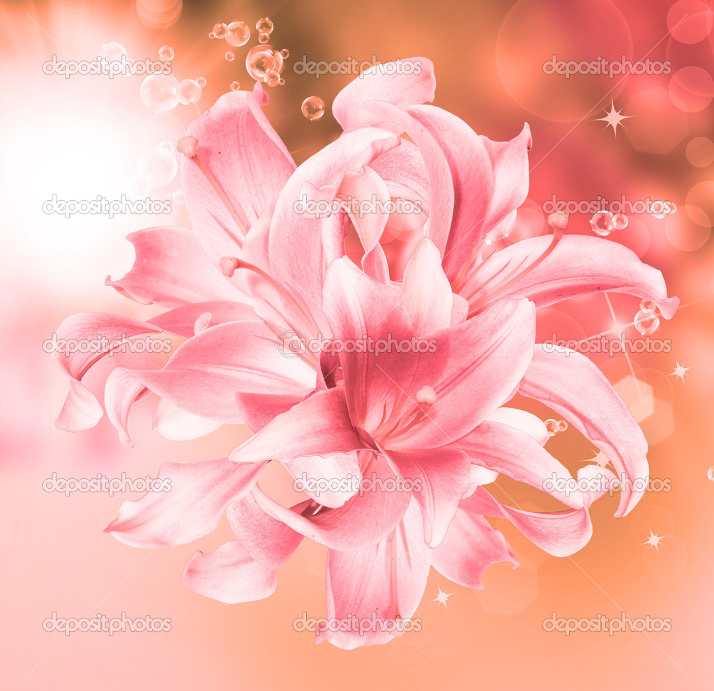 Scheda di bella lily flowersspring natura backgroundfloral foto scheda di bella lily flowersspring natura backgroundfloral foto stock izmirmasajfo
