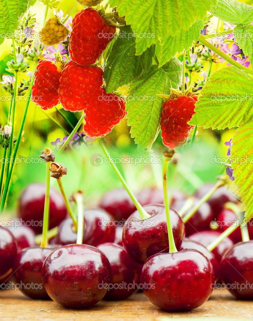 Fresh Cherry and  garden raspberries