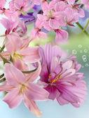 krása květinové pozadí
