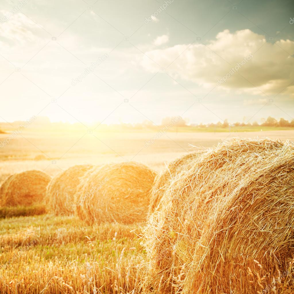 Summer Field with Hay Bales at Sunset