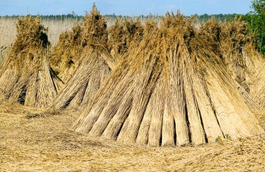 Dry straw, nature concept