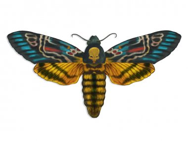 Colorful death head moth