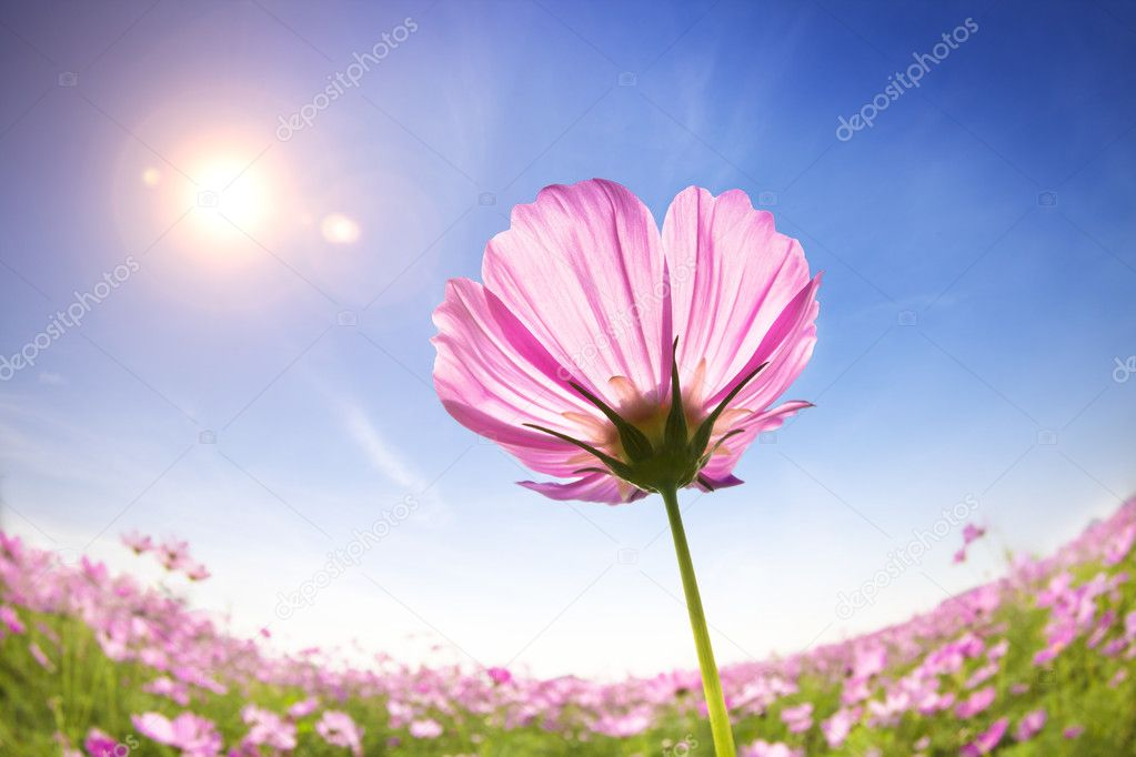 Beautiful daisies on the sunlight background