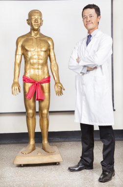 Full of chinese medicine doctor and human body Acupoint model