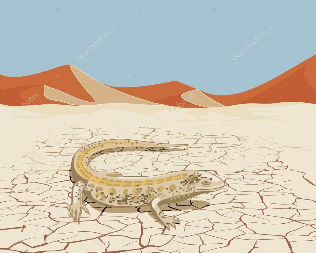 Desert with lizard
