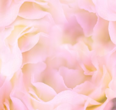 Gentle Floral Background - Flower's petals are made as macro