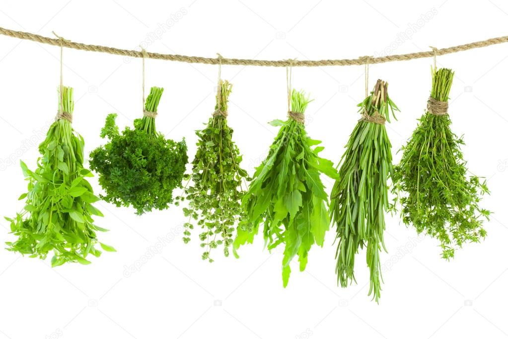 Set of Spice Herbs - Hanging and Drying - isolated on white bac