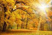 Fotografie goldene Herbst mit Sonnenlicht - schöne Bäume im Wald