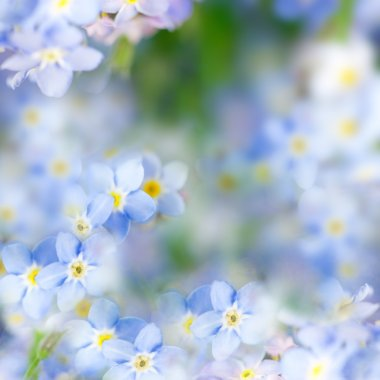 Fantasy Gentle Spring Background - Blue Flowers Defocused