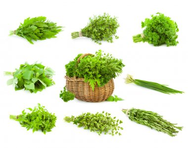 Big Set of Bunches and Basket of fresh Spice Herbs - isolated