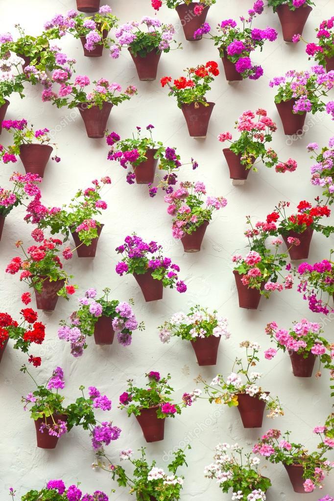 Suficiente vasos de plantas e flores coloridas em uma parede branca, antigo  XL09