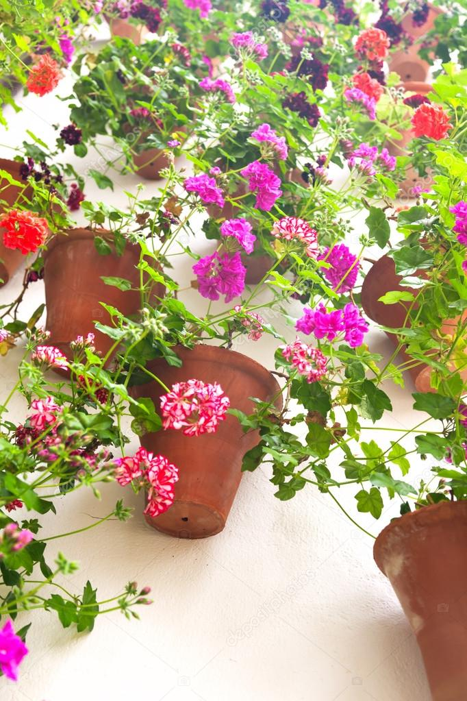 Flowerpots and colorful flower on a white wall with copy space f