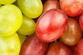 Fotografie red green grape