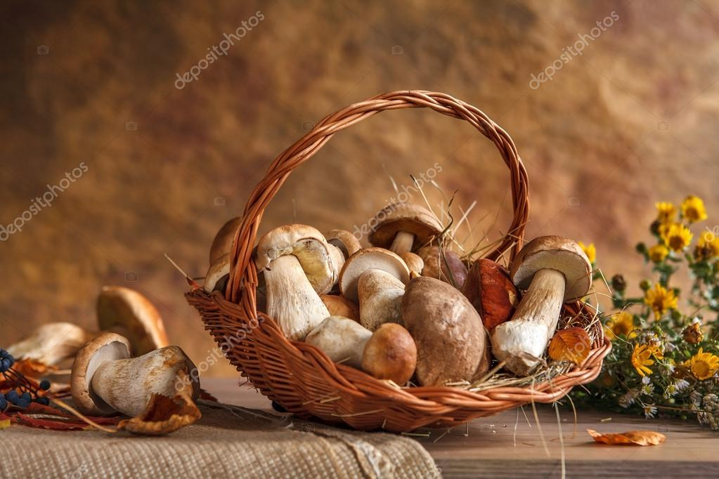 Mushrooms still life