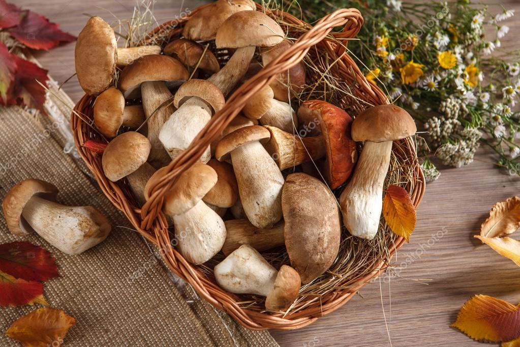 Still life of boletus mushrooms in a basket