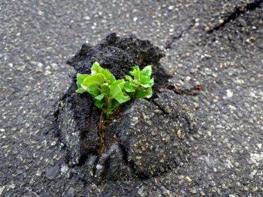 Nature Wins. Tree vs asphalt