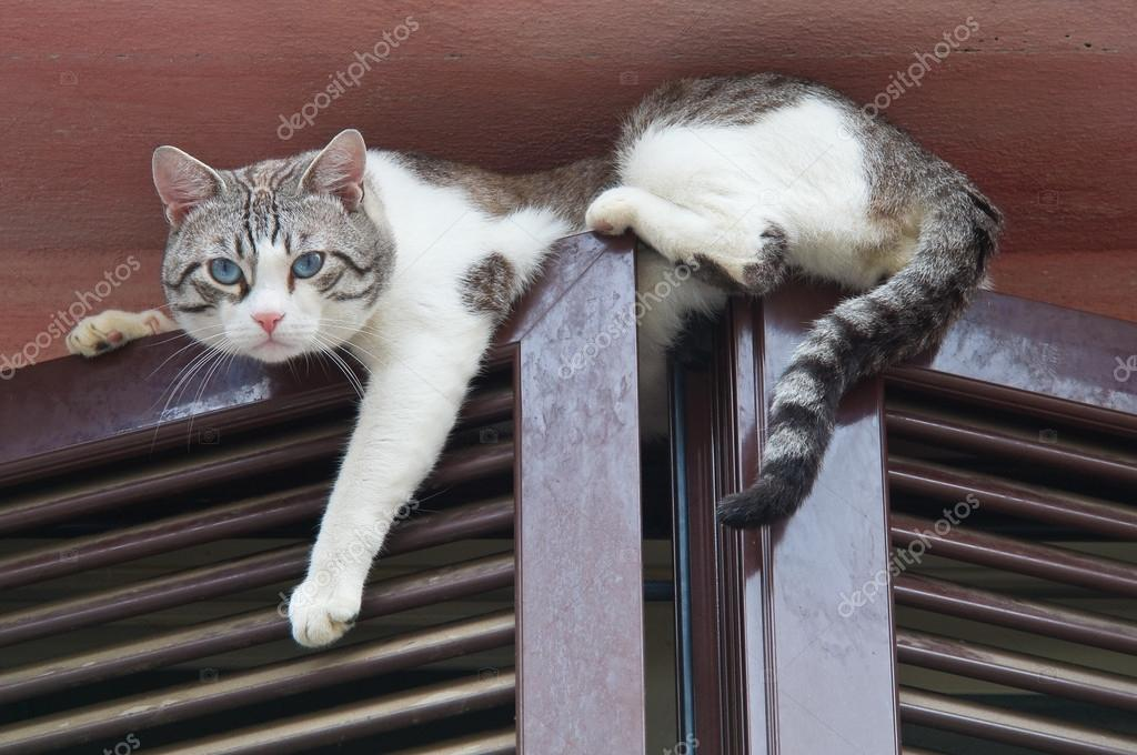 Cat climbing window.