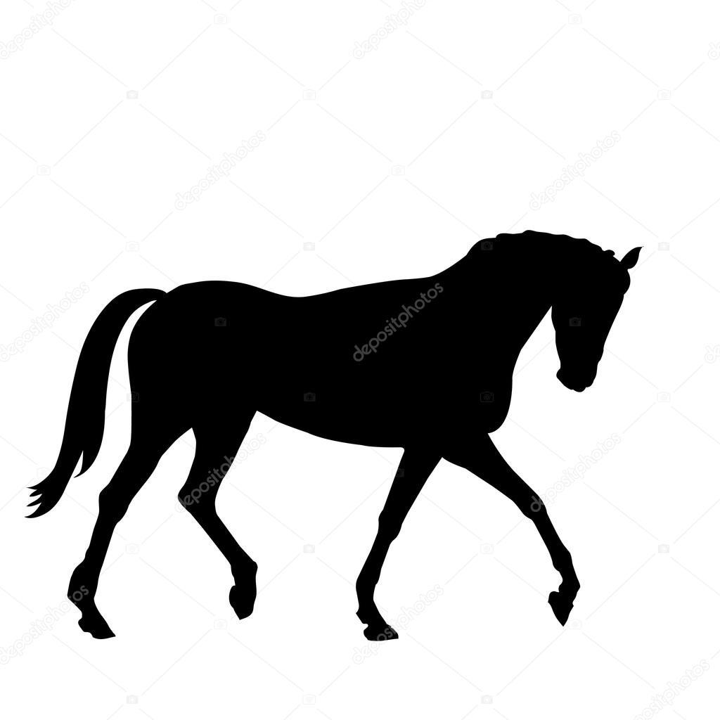Beautiful black horse silhouette