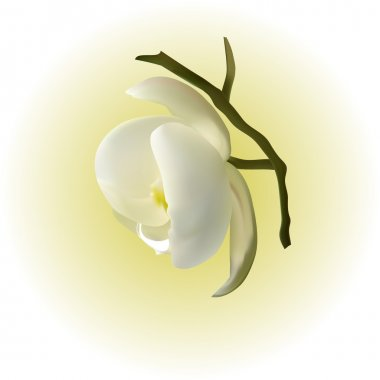 Gentle white Orchid as a symbol of relaxation