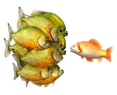 Persuasion concept, goldfish and piranhas
