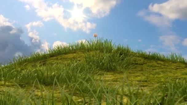 travnaté kopce s heřmánkem a berušky na pozadí time-lapse nebe, krásný 3d animace