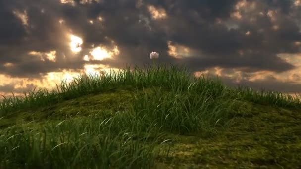 Grassy hill with chamomile and ladybird against the background of time-lapse heaven, beautiful 3d animation