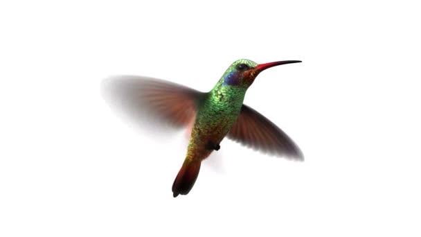 kolibri sem