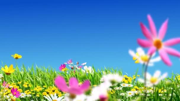 zelené louky a květiny