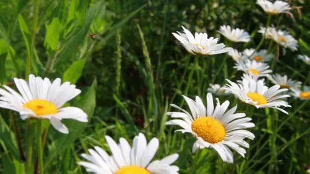 virágok a kertben