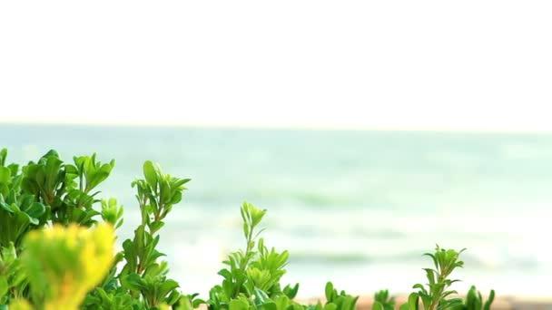 palmy a moře