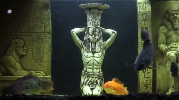Aquarium fish and ornamental statues