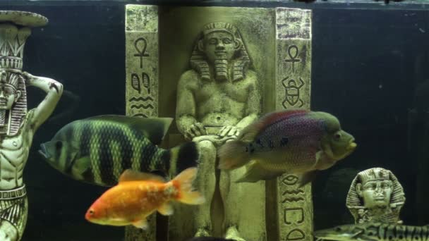 Aquarium fish and ancient Egyptian statues